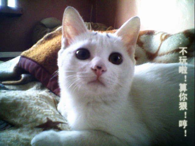 猫猫的失恋进行曲